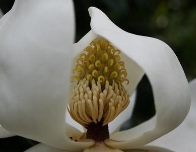 Flowers-A-1st-Marti Derleth-Inside Surprise