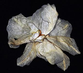 Flowers-A-HM-Debra Regula-After the Bloom