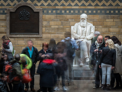 Charles Darwin contemplates Evolution