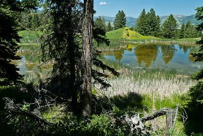 Beaver Wilderness