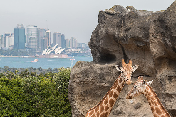 Christine_A Zoo with a View-2