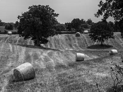 Wheat Field - Puglia