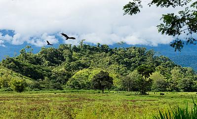 Edge of the rainforest