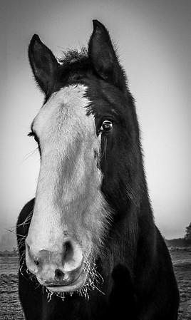 Jackie - horse
