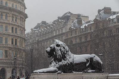 Christine_A Lion in Winter-3807