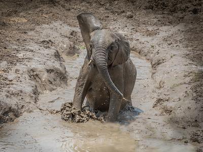 annie nash glorious mud