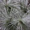 WIN-B-Susan Capstick-Icy Needles