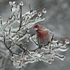 WIN-A-1st-Debra Regula_Ice Cold