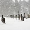 WIN-A-John German-Cypress Church Cemetery