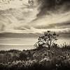 Dee Why Headland