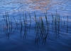 4-Advanced-Assigned_-_Mirrorage_Reflections_and_Reverberations-2-Larry_Whittaker-Lake_Grasses