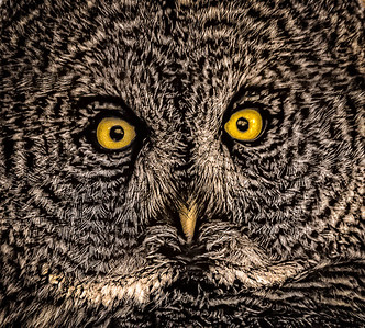3-Intermediate-Open-1-Lloyd_Blackburn-Owl_Face