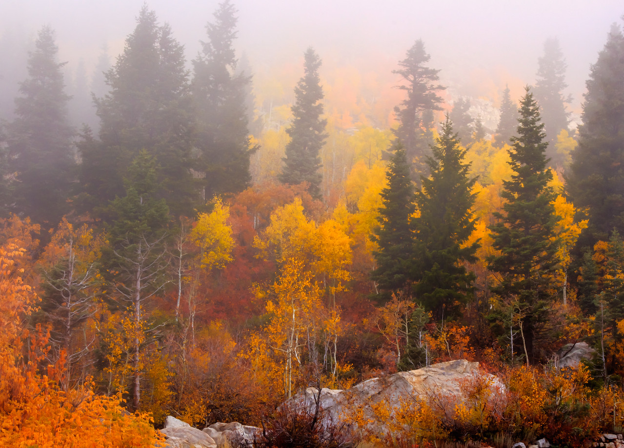 4-Advanced-Open-DNP-Larry_Whittaker-Autumn_Colors_in_the_Mist