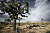3-Intermediate-Altered_Reality-DNP-Dan_Barnett-Joshua_Tree