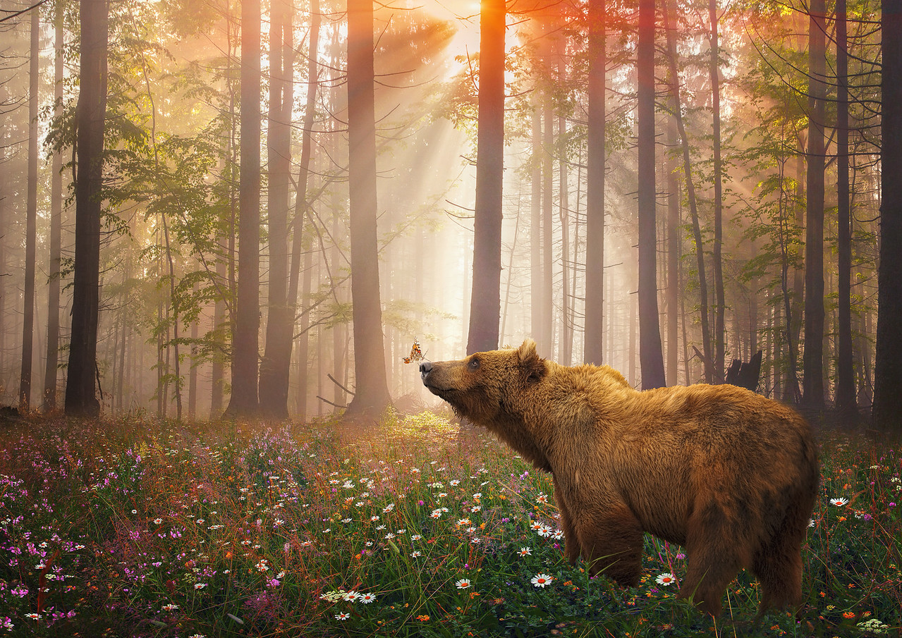 4-Advanced-Altered_Reality-1-Lorraine_Logan-Bear_and_Butterfly