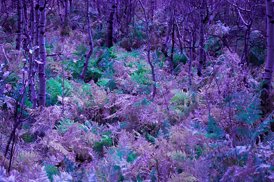 3-Intermediate-Altered_Reality-DNP-Phillip_Adams-Violet_Forest