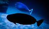 3-Intermediate-Open-DNP-Larry_Hardwick-SHADOW_FISH