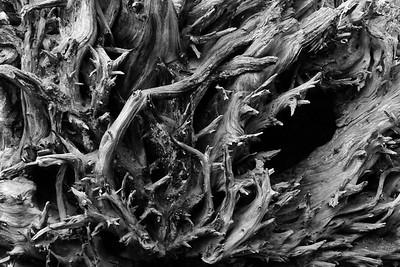 3-Intermediate-Open-DNP-Dan_Barnett-Roots