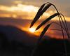 3-Intermediate-Open-DNP-Lin_Cheong-sunset