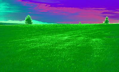 3-Intermediate-Altered_Reality_-_Open-DNP-Lin_Cheong-grassland