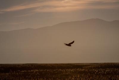 3-Intermediate-Open-DNP-Brandon_Tolman-Evening_Flight