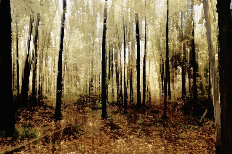 A160_A_walk_in_the_watercolour_woods_4438_ECC_creative