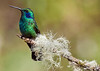 A128_Elegant_Hummingbird_for_ECC_Image_of_the_Year