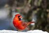 A223_Cardinal-1587-2_