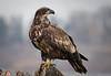 A223_Eagle-9992-268_