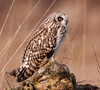 A25_Owl-1_