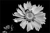 A013_Flower