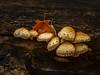 Wild Mushroom Cluster
