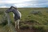 Horse At Gulfoss