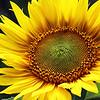 CUR-A- Debra Regula-Sun Spirals