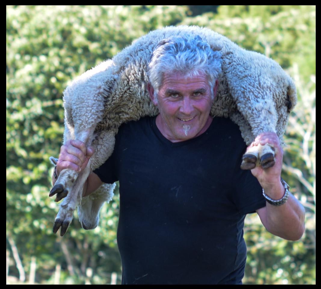 Hands on shepherd