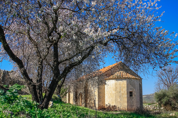 Church Blossom