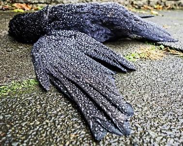 Murder of Crow