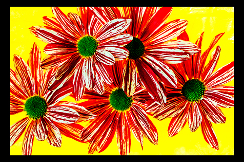 Flower Delight