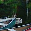 ROW-A-Diane McCall-Ducks & Docks & Canoes