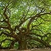 TRE-A-HM-Diane McCall-The Angel Oak