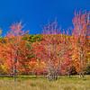 TRE-A-Gene Lentz- Colors of Autumn
