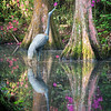 TRE-A-Tobé Saskor-Arboreal Magic in Magnolia