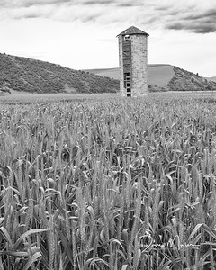 Palouse Wheat, SE Washington, May 2016