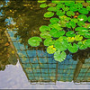 Buildings Reflected In A Lily Pond