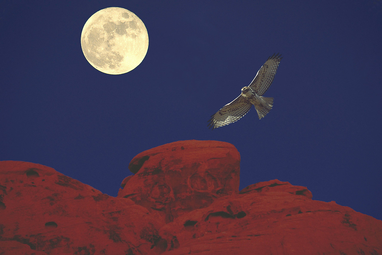 4-Advanced-Altered_Reality_1_entry_only_in_this_category-2-Don_Trowbridge-Hawk_by_Moonlight
