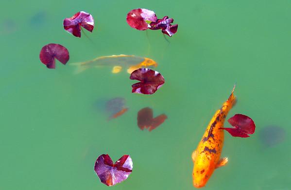 3-Intermediate-Open-DNP-Barbara_Holdcroft-Pond