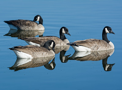 3-Intermediate-Assigned_-_Negative_Space-3-Dan_Barnett-We_Three_Geese