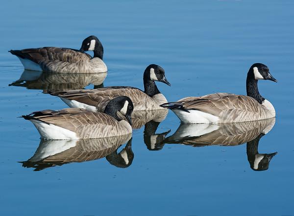 3-Intermediate-Assigned_-_Negative_Space-3-Dan_Barnett-We_Three_Geese