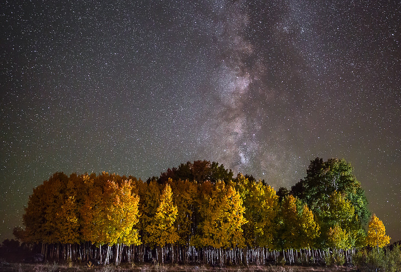 5-Master-Altered_Reality_1_entry_only_in_this_category-3-Richard_Ansley-Starry_Aspens