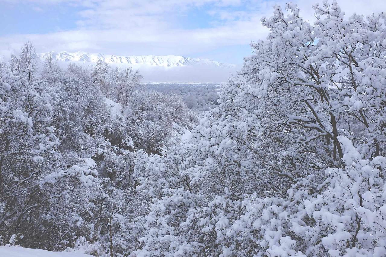 3-Intermediate-Open-DNP-Paul_Randle-Cache_Valley_Big_Snow